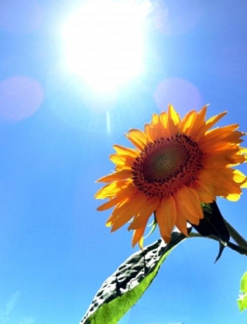 夏の暑さで体がだる重・・。でも、体調不良の原因は自律神経症状かもしれませんよ