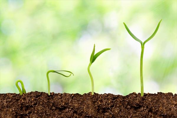 発芽の成長