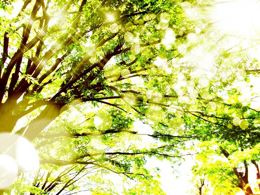 きらきらの木々
